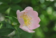 DSC_0145 (amiinsidemyself) Tags: flowerwatcher naturewatcher
