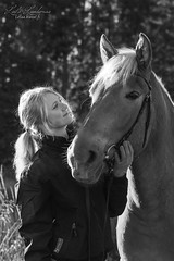 IMG_8100 (Le-laa) Tags: horse photography equine finnhorse suomenhevonen equinephotography horsephotography canon7d