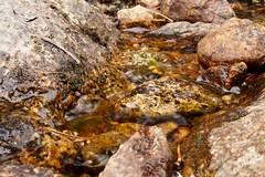 Yosemite River Rocks (Yosemite Love) Tags: nature rocks yosemite yosemitenationalpark riverrocks ynp tuolumnemeadows tiogapass sierranevadamountains tuolumneriver californiadrought sonya58 yosemitelove925