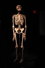 Science World - October 15, 2015 (rieserrano) Tags: skeleton human bodyworlds plastination humanskeleton