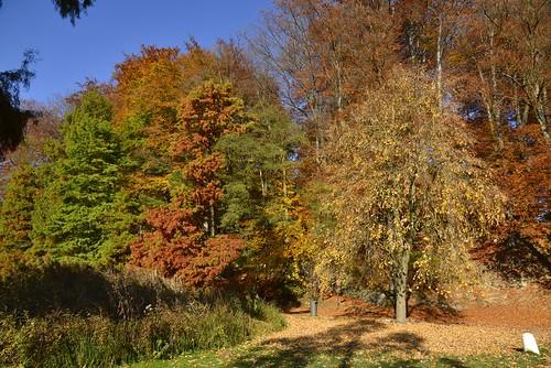 Les milles couleurs de l'automne sous un ciel clair