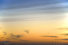 THANET OFFSHORE WIND FARM  -  (Selected by GETTY IMAGES) (DESPITE STRAIGHT LINES) Tags: morning autumn sea england sunlight seaweed beach nature water beauty rock digital sunrise dawn bay coast kent seaside sand aperture nikon october rocks flickr surf day dof bigma tide tripod shoreline sigma iso coastal shore getty coastline naturalbeauty botanybay tidal mothernature magichour windfarm goldenhour gettyimages manfrotto d800 firstlight broadstairs themagichour thegoldenhour paulwilliams lowlightphotography sigma50500mm outdoorphotography sunrisephotography botanybaykent nikond800 botanybaybroadstairs thanetoffshorewindfarm sigma50500mmf4563apodgoshsm despitestraightlines sunriseoverbotanybay botanybayinbroadstairs