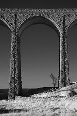 Shelter (dannyhow2011) Tags: ribblehead ribbleheadviaduct victorian viaduct tree lonetree yorkshire ingleton