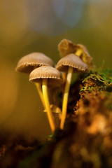 Little Stool's (cindyz48) Tags: soft toadstool mushroom tree decay forest