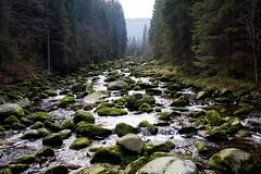 Vydra river (Borek Lupomesky) Tags: vydra šumava bohemianforest czechrepublic river