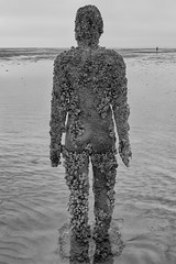 Complexion! Explored. (miketonge) Tags: anthonygormley gormley crosby mersey crustaceans statue sculpture anotherplace beach barnacles