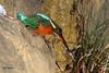 Martin-Pêcheur poisson 170117-01-RP (paul.vetter) Tags: alcedoatthis kingfisher oiseau martinpêcheur eisvogel