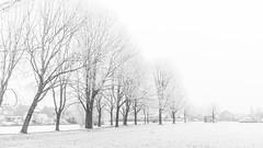 Ripe (_michelwalbeek_) Tags: leeuwarden buiten cold januari koud outdoor park westeinde winter wit ripe rijp white
