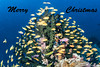 Merry Christmas 2016 (Cruising, traveling & dive pics.) Tags: 2016 png diving fish