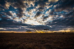 The African savanna (SebastianJensen) Tags: tanzania africa safari serengeti nationalpark nature clouds outdoor savanna wildlife exploration sunrise landscape hdr