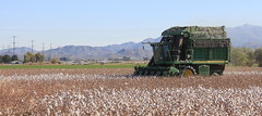 Harvest Time (BCooner) Tags: arizona goodyearaz cotton harvester agriculture