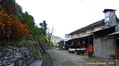 P1100985 We stop for tea at a Bhedikharka GH (10-35AM) (ks_bluechip) Tags: nepal trek dec2016 annapurna abc mbc landruk tolga pitamdeorali pothana