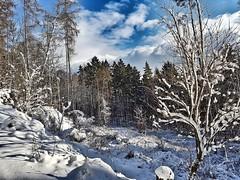 #Oberursel #taunus #winter #snow #winterwonderland #frostyforest (mogromo) Tags: frostyforest winterwonderland snow taunus oberursel winter