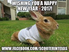 happy new year 2017 (tammybeck) Tags: rabbit lapin krolik scooter rescued pets wildrescueincoftxakarabbitrescue kaninchen kanin rex furry friend