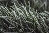 Matin d'hiver (Matthieu Tijou) Tags: canon 600d 18135mm 18135 herbe grass photography photographe green vert gelée froid winter anjou natural nature glace matin white végétation shoot réflex