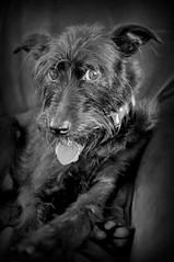 minimimi (stosh26) Tags: dog gx7 20mm17