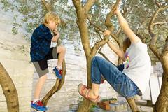 day fifteen: avignon (dolanh) Tags: zooey france avignon lucas treeclimbing