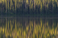 Forest Reflection (Bob Bowman Photography) Tags: forest trees light morning sunrise lake green water reflection diffuse pine idaho stanley landscape serene silence sawtooth reflect