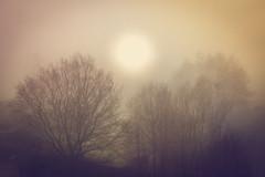Nebel (jomchill) Tags: fujixpro1 fujix fuji