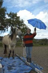 lz190604(125) (lotharlenz) Tags: mangalargamarchador louis julegaupp jule plane gelassenheit fürchten geländereiten regenschirm reportagegeländereiten caballo cavalo cheval equus häst hest hestur hobu horse konj lotharlenz paard pferd zirgs 56812dohr deutschland