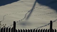 IMG_8069 (bencze82) Tags: canon eos 700d zeiss sonnar 135mm m42 hévízgyörk otthon home hungary magyarország winter tél cold cool snow ice jég hó január january 2017
