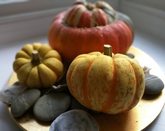 Gourds (Henry Hemming) Tags: gourd squash pumpkin stones still life indoor pebble plate orange yellow red gold background