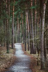 Park | Panemunė, Kaunas #24/365 (A. Aleksandravičius) Tags: park forest trees path walk lithuania kaunas nikon nikon70200mmf28gedvrii 70200 365days 3652017 d810 nikond810 365 project365 24366 perspective