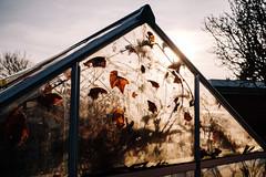 Winter Sun in Greenhouse Window (Poul_Werner) Tags: danmark denmark nrsundby drivhus garden have sollys sunlight nørresundby northdenmarkregion dk