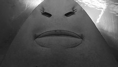 Almost human face in Sawshark (sandklef) Tags: shark sawshark face human black white android place humptydumpty humpty fu dumpty