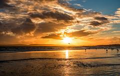 Sunset (Anthony White) Tags: bournemouth england unitedkingdom gb boscombepier boscombetown boscombe seascape seagull clouds cloudscape silhouette birdinsunset orange beautiful winter2017 sunset sony dscrx100m3