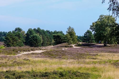 Gifhorner Heide 150830 069.jpg