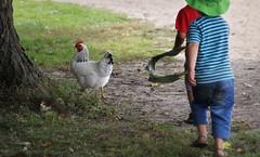 Chicken Run (Doris Burfind) Tags: people chicken children farm running