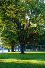 DSC06866-ILCE-7-20150927 (Falcdragon) Tags: city trees light zeiss river golden belgium hour liege meuse liège ilce7 fe55mmf18 sonya7alpha