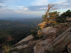 First Light on the Edge (zoniedude1) Tags: arizona morning mogollonrim vista therim cliffedge forest sunrise view precipice rocky cliff 1000ftvertical whoa edgy 7800ftelevation firstlightontheedge rim edge escarpment sitgreavesnf asnf apachesitgreavesnationalforest rimshot outdoors adventure exploration discovery outinthewild beauty coloradoplateau highcountry rimexpedition2015 nature southwest canonpowershotg12 pspx6 zoniedude1 earthnaturelife explore