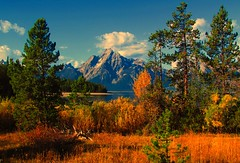 Grand Teton National Park (udbluehens) Tags: grandtetonnationalpark mtmoran colterbaypicnic grandtetonfallcolors