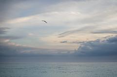 / anna maria island / (aubreyrose) Tags: ocean travel sunset sky bird beach gulfofmexico clouds sand waves florida shore holmesbeach annamariaisland manateebeach