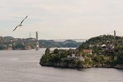 Bergen's fijord (Mauro Grimaldi) Tags: cruise norway norwegen northsea scandinavia norvegia scandinavian msc fijords maredelnord msccrociere msccruise fiordinorvegesi crocieranordeuropa norwaysfijords