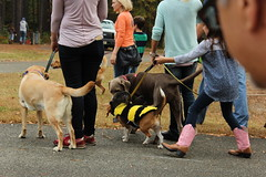 """Dogs, dog park, richmond • <a style=""""font-size:0.8em;"""" href=""""http://www.flickr.com/photos/31682982@N03/22535175131/"""" target=""""_blank"""">View on Flickr</a>"""