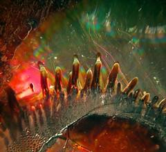 Fingers (Sea Moon) Tags: macro colors cd patterns plastic drips dried diffraction ferrofluid