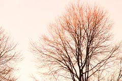 DSC_8667 (louis_mancuso) Tags: blue winter sunset field geese twilight corn cornfield pennsylvania farm goose pa newtown goldenhour yardley newtownpa flyingsouth newtownpennsylvania geeseflyingsouth shadybrookfarm yardleypa yardleypennsylvania winter2015 shadybrookfarmyardleypa shadybrookfarmyardley gooseflyingsouth