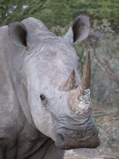 Botswana Hunting Safari 62