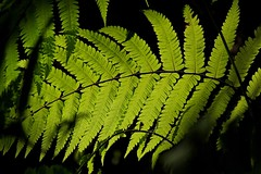 Sunlit Leaves (DaveFlker) Tags: bali leaves villa besar