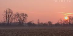 MH_035 ( Ed Lee) Tags: wood morning sky sun mist color tree field fog contrast sunrise landscape nikon 7100 outdoor foliage tele 85 tone flickraward5
