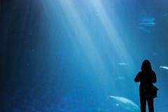 the open sea (j j miller) Tags: ocean california water silhouette aquarium coast monterey education tank montereybayaquarium montereybay science learning hwy1 sustainability californiacoast bigblueocean