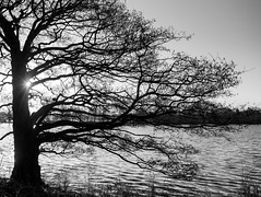 End of season (davidwalker58) Tags: sunrise sun water trees bw anawesomeshot