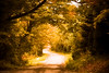 Autumn dreams... (Marla Nutbrown) Tags: autumn fall dirt road path trees leaves color marlanutbrownphotography marla landscape photography