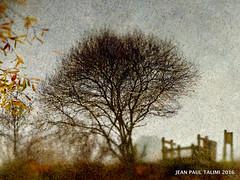 Racines (JEAN PAUL TALIMI) Tags: talimi texture racines france biscarrosse landes aquitaine reflets hiver banc lumieres lignes arbre riviere solitude sudouest silouettes maison