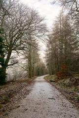 Pitcaple Forest Walk 1 (Bob Hetherington) Tags: pitcaplegrampian forest road trees frost scotland aberdeenshire outdoor scenic lumix panasonic gx7 micro43 winter january pitcaple grampian li