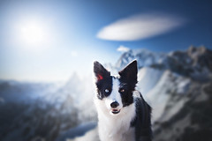 Mont Blanc (Alicja Zmysłowska) Tags: border collie mont blanc italy bordercollie sun sky alps