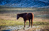 portrait abstracts (david_sharo) Tags: nature wildlife moraine northpark dusk hawk horses cold